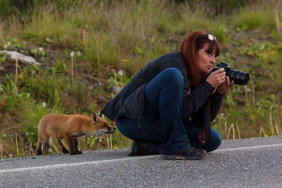 fox checks out photographer from behind
