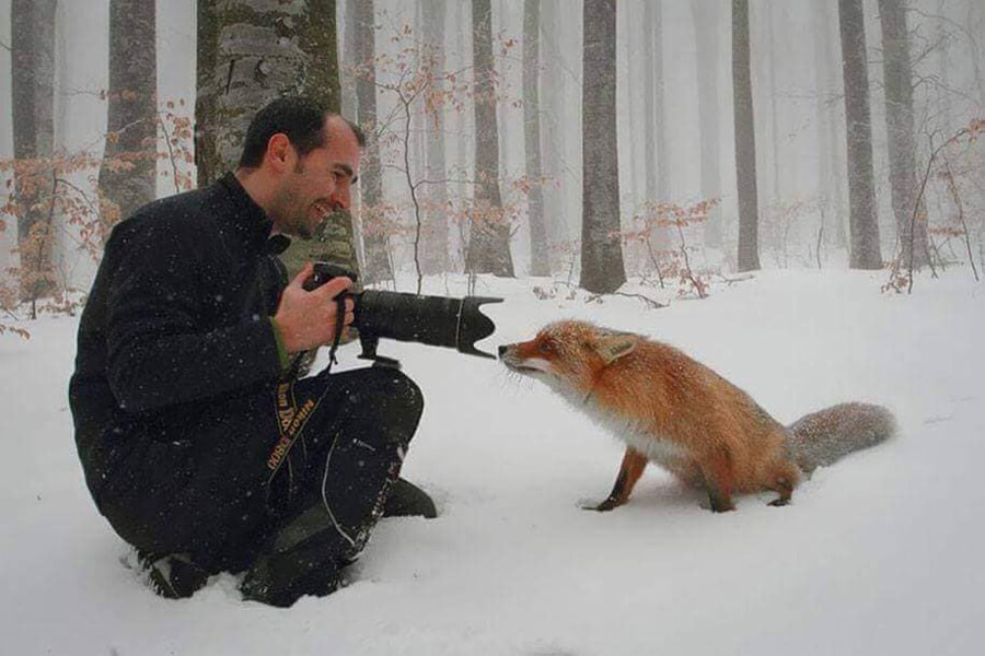 fox confused by camera