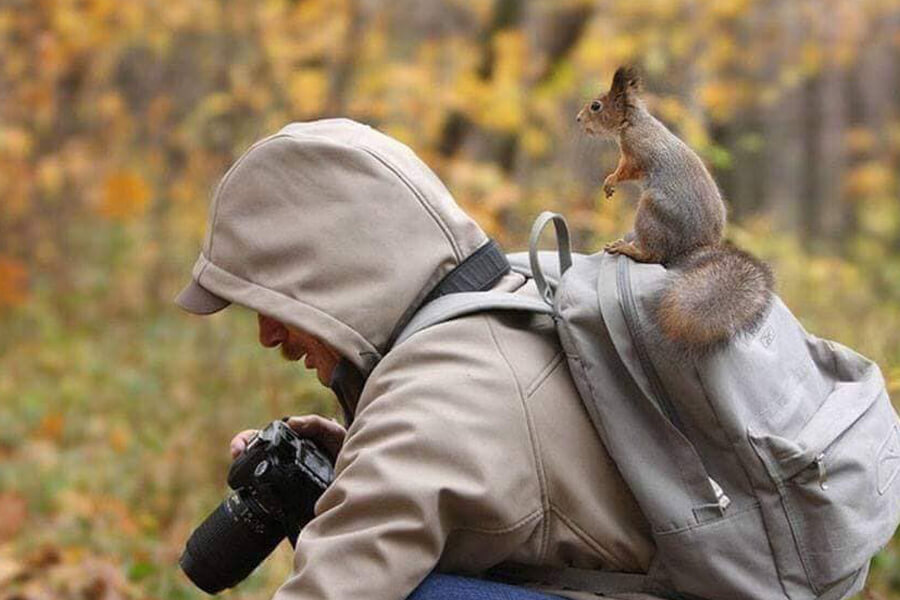 squirrel help take photos
