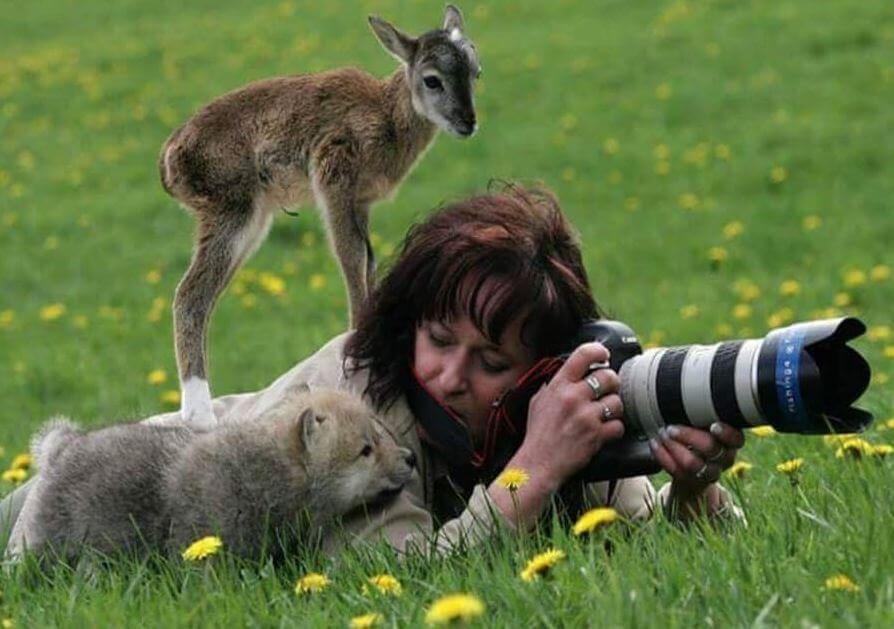 animals photographer
