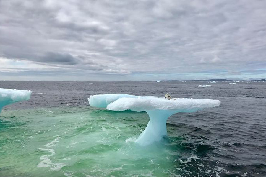 mystery creature found on top of iceberg