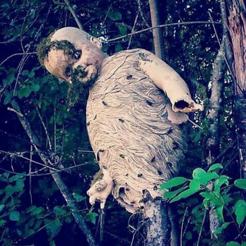 nest-of-wasp-101644-74222.jpg