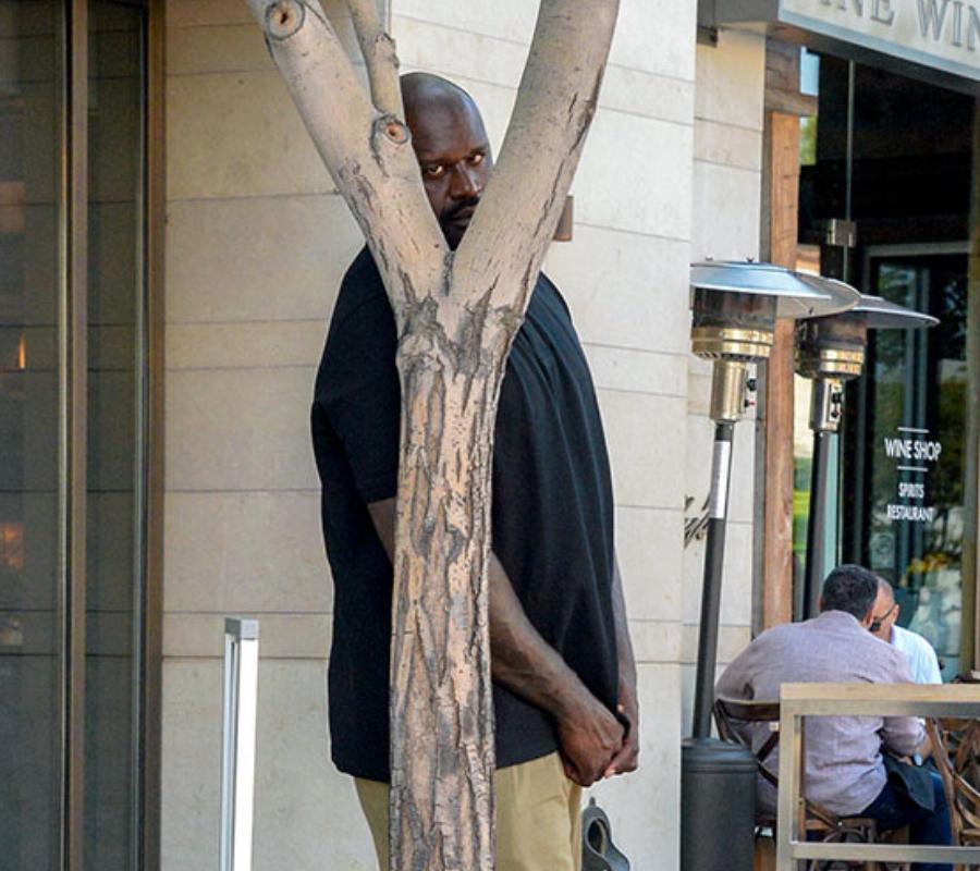 tree tree (1)