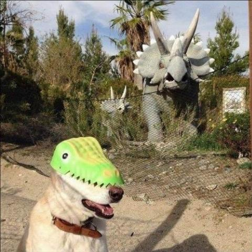 dog-dino-hat-70027.jpg