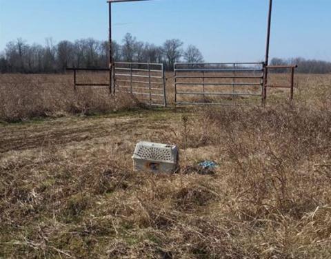 1-dog-found-in-crate-1-731x574