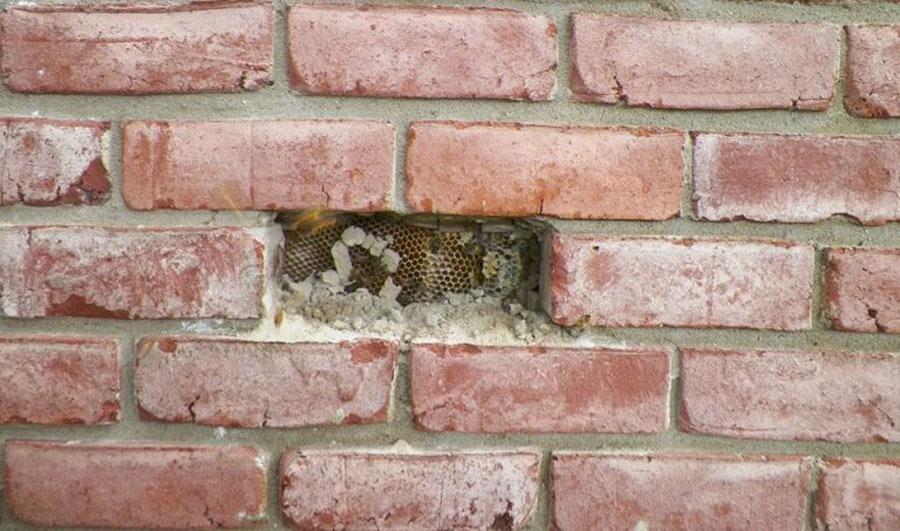 Beehive-Brick-Hole-e1538674730506-768x453-80554