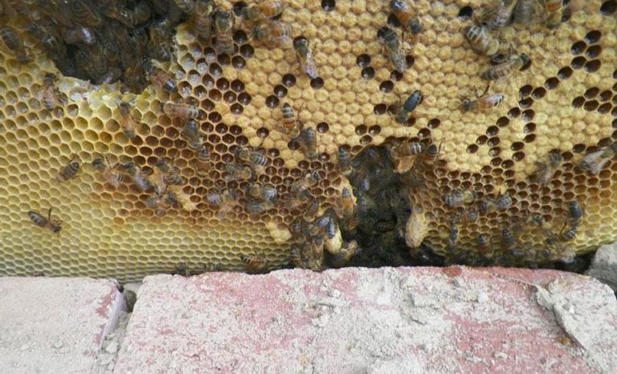 Beehive-Close-Up-e1538675006175-768x465-87700