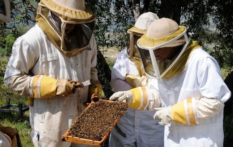 Beekeepers-with-Bees-99011