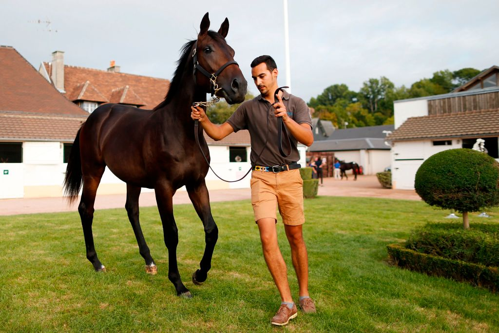 horses thoroughbred