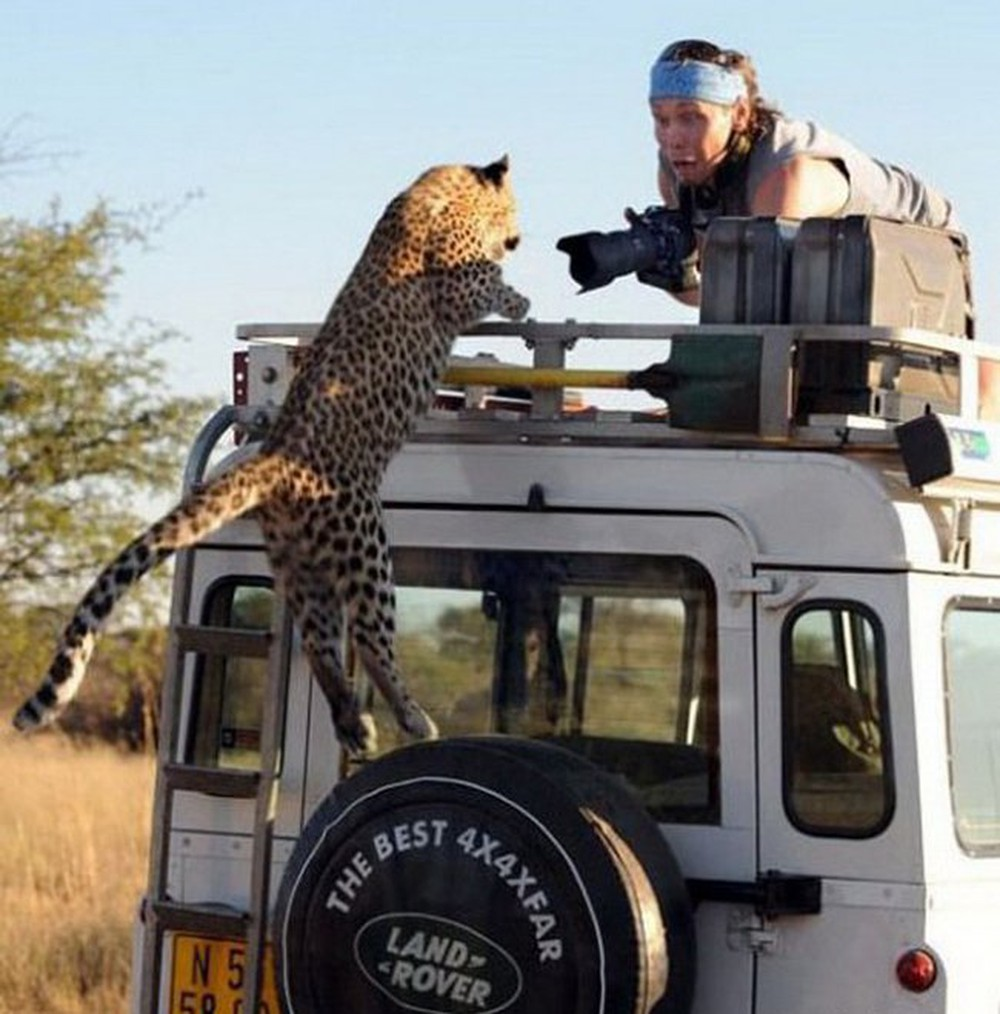 cheetah-car