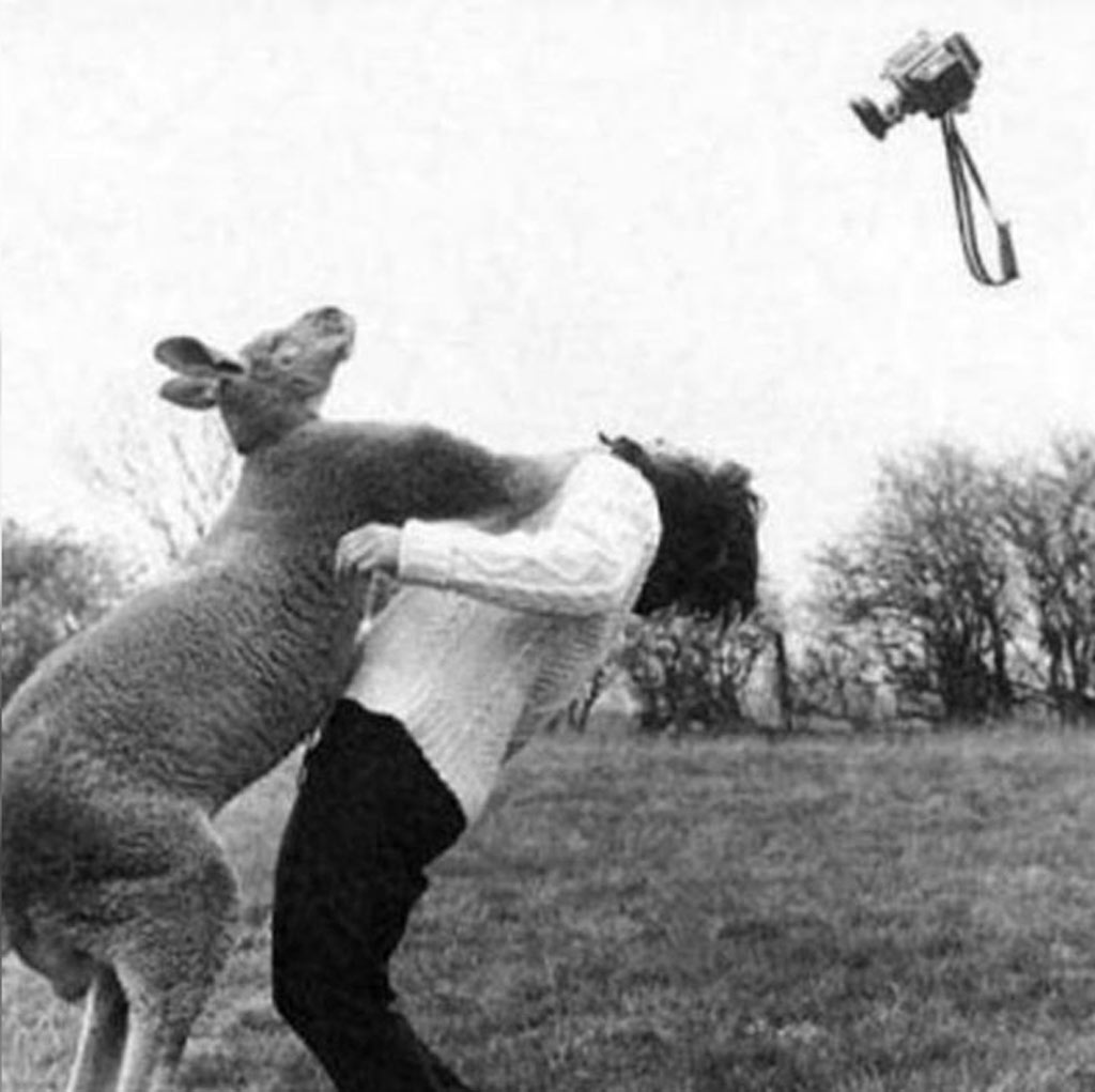 a kangaroo punches a person with a camera