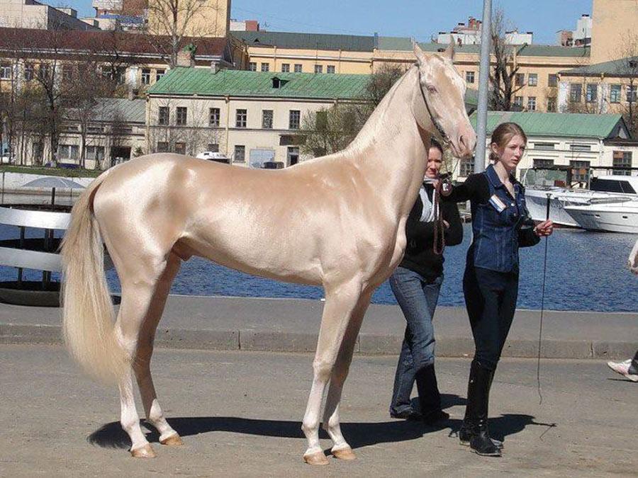 unique-horse-colors-0-12491