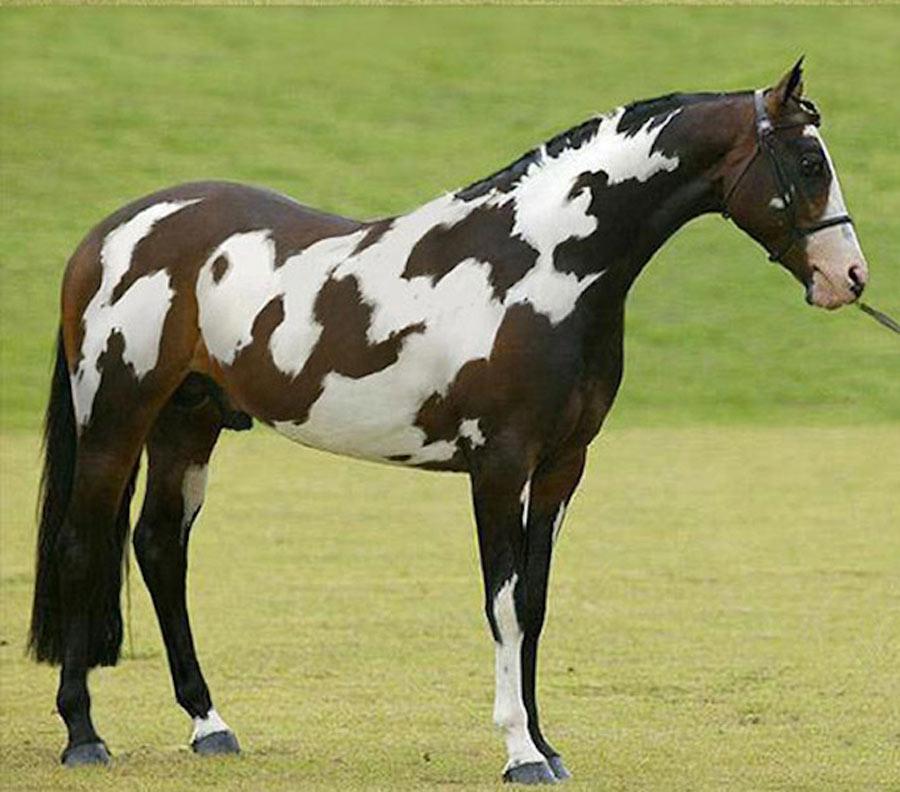 unique-horse-colors-23-18743