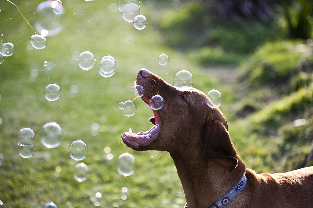 GettyImages-170977325-10920-33324 viszlas trying to catch bubbles