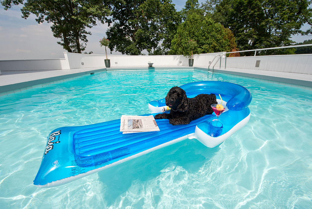 GettyImages-585142214-19028-71656 cocker spaniel on pool float in the water