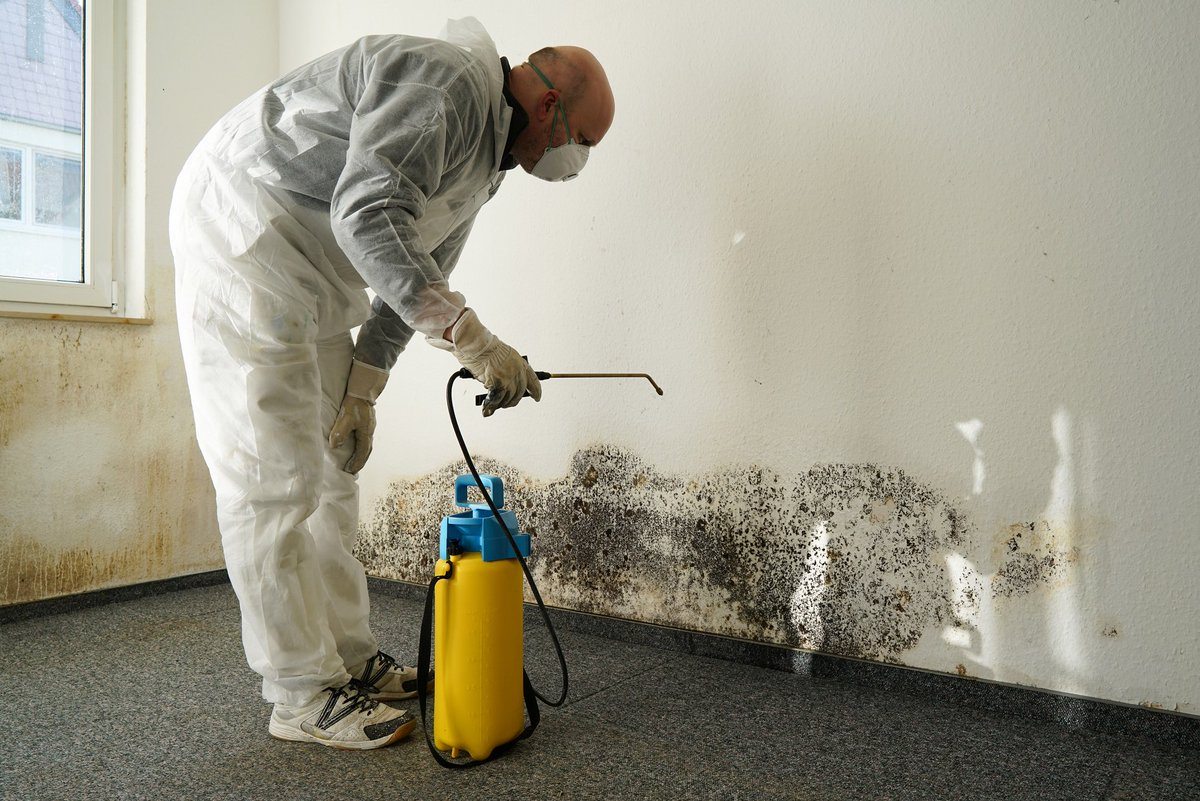 Employee prepares to sanitize mold on a wall