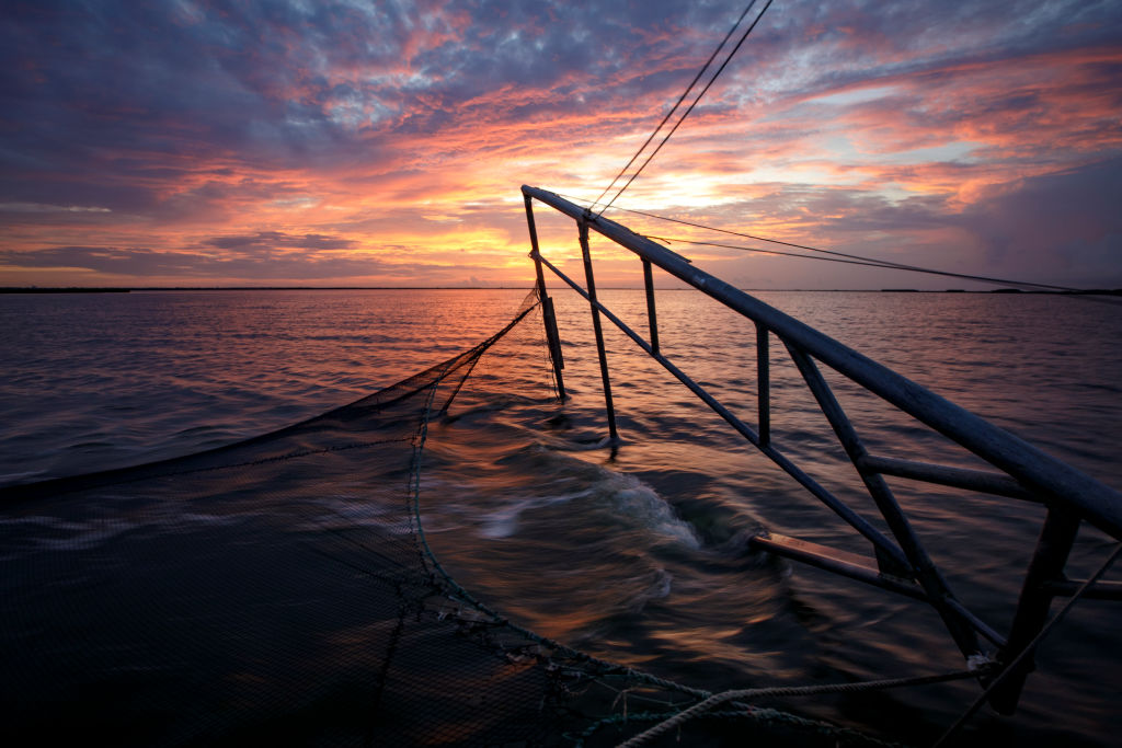 dropping nets