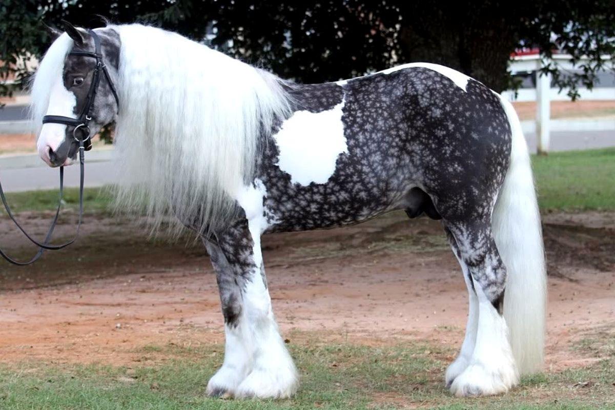 horse dapple coat
