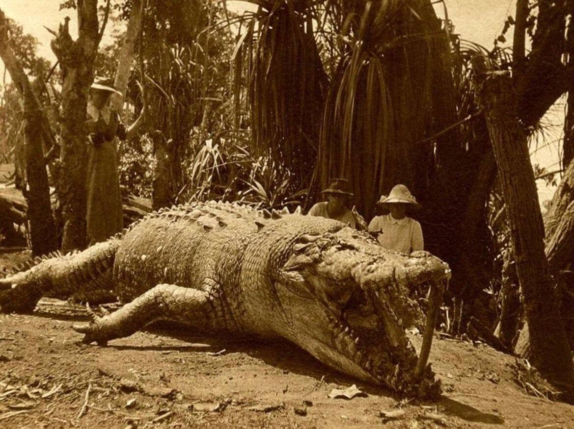 28 foot crocodile with two hunters in background