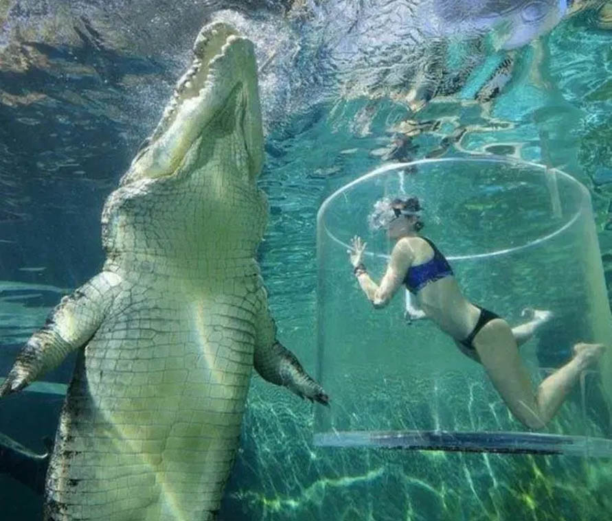 croc with lady