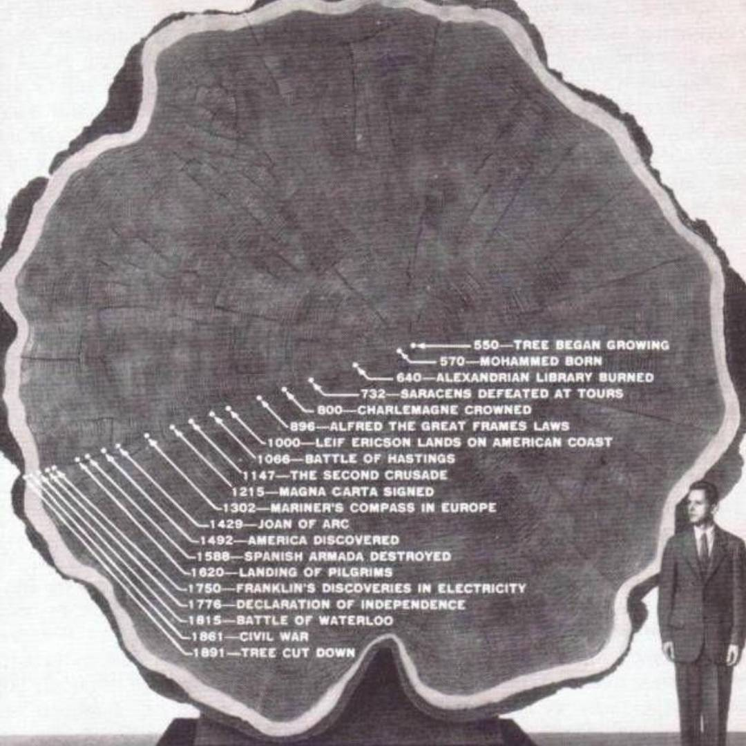 half tree with lines marking dates