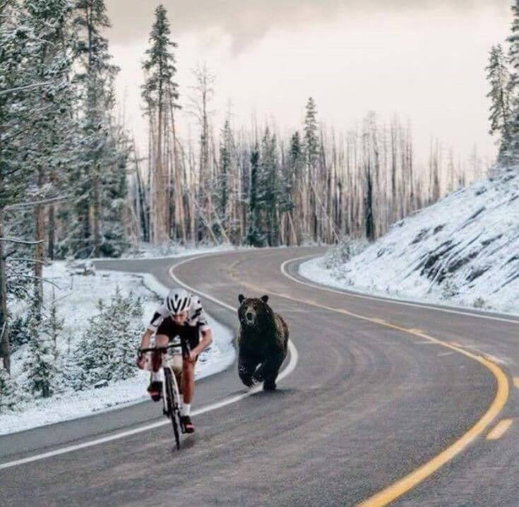cyclist in alaska being chased by brown bear