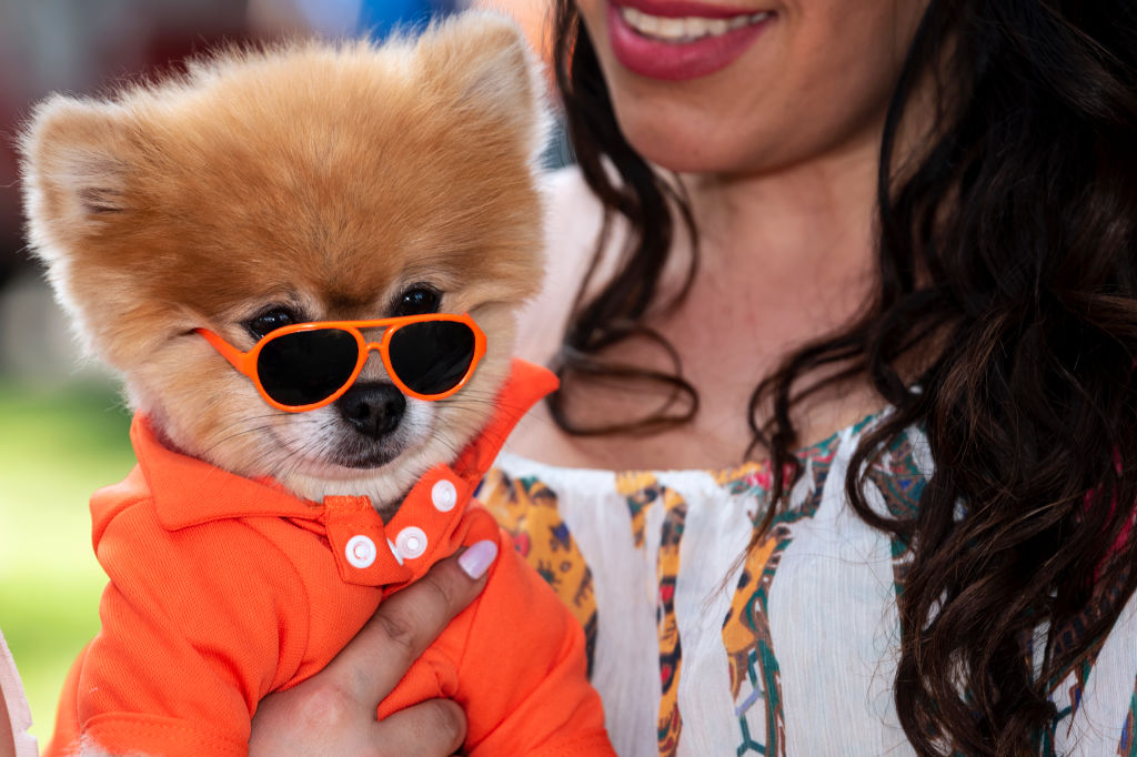 A dog wears sunglasses at Woofstock 90210, a dog festival in Beverly Hills, California