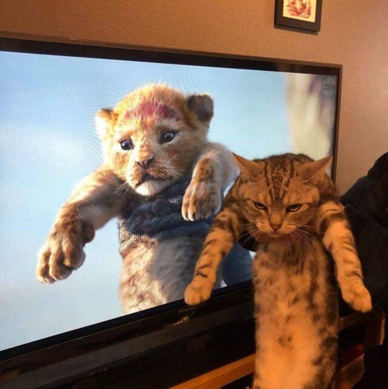 a CGI cat and a real cat