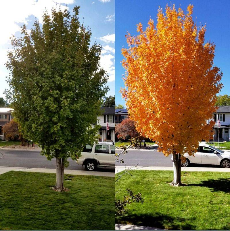 the same tree in different seasons