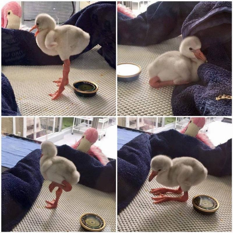 baby flamingo with long legs