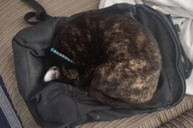 cat sleeping on backpack