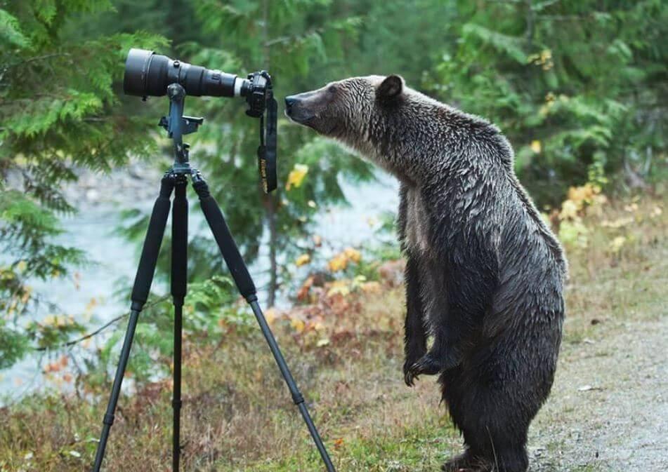 wildlife-photographer-21