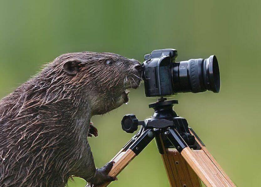 wildlife-photographer-22
