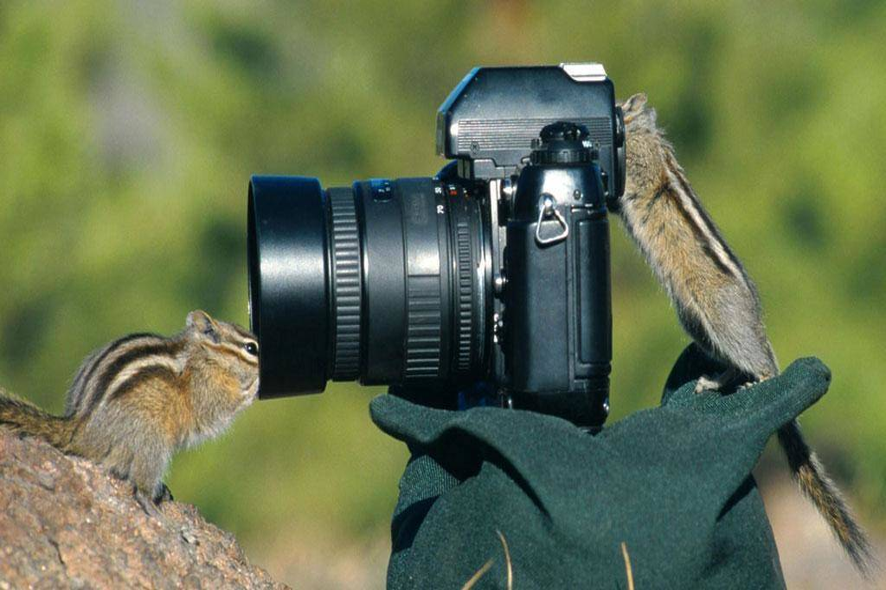 wildlife-photographer-24