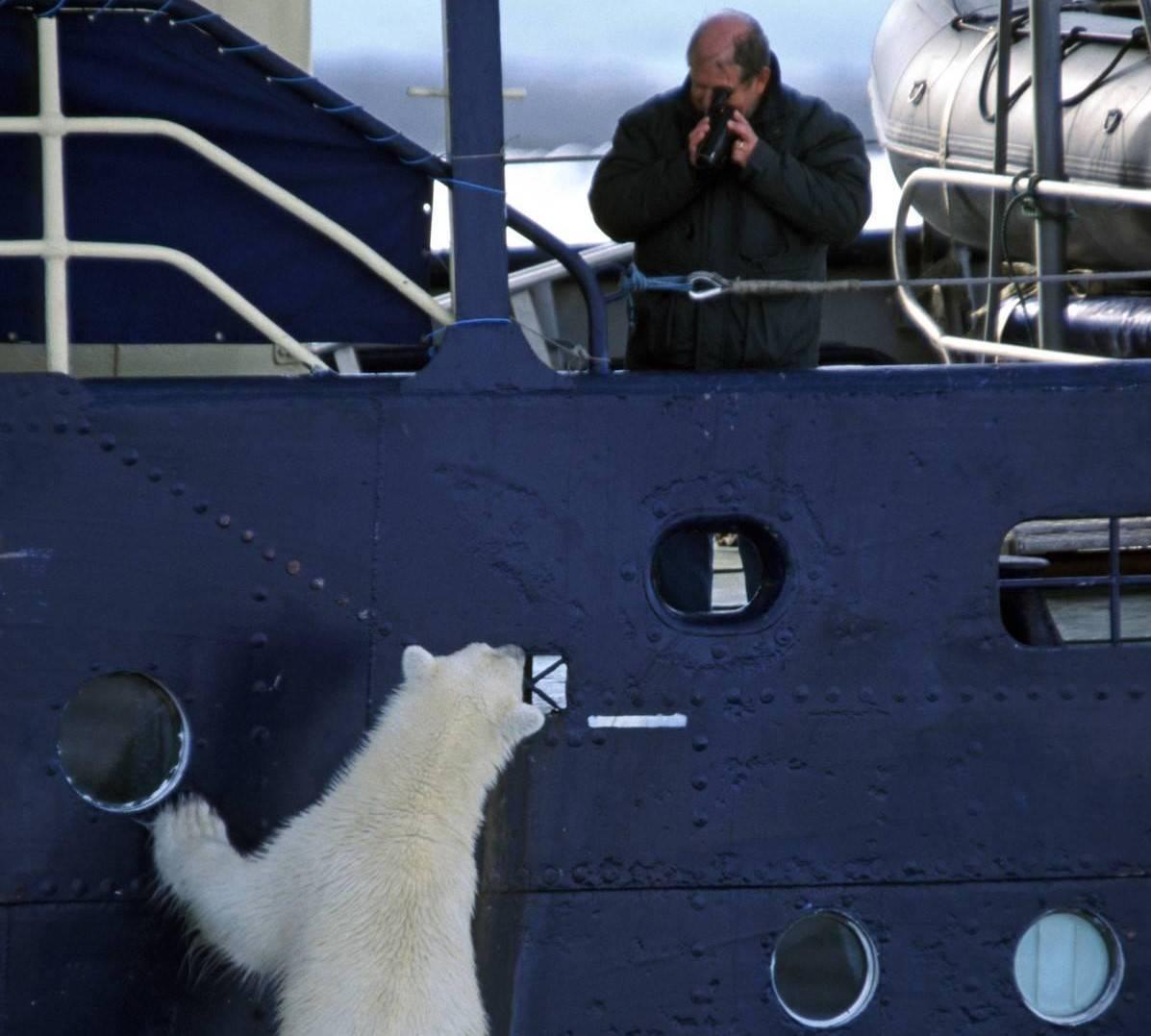 tourist-photographing-curious-polar-bear-ursus-maritimus.-29250
