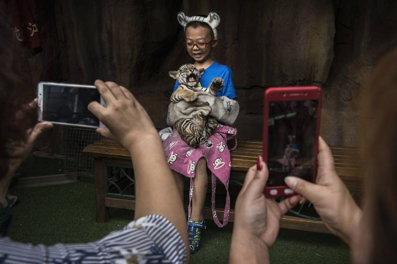 China's Siberian Tiger Farm