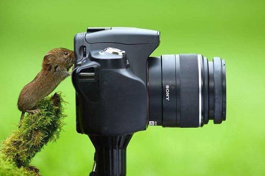 wildlife-photographer-33