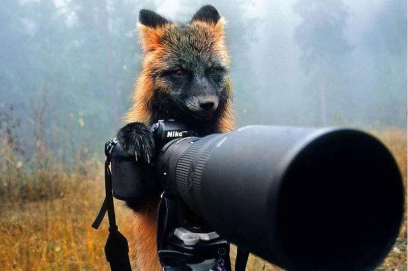 wildlife-photographer-38