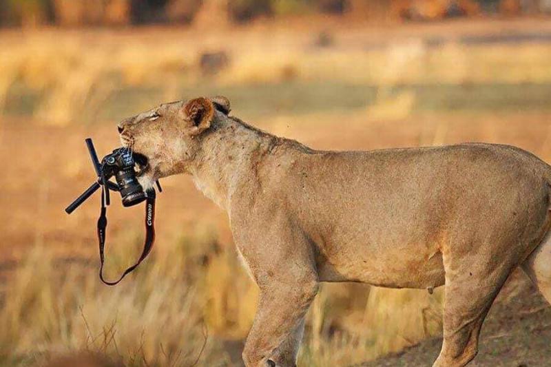 wildlife-photographer-6