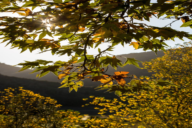Fall Color Pops Along The Santa Ynez River