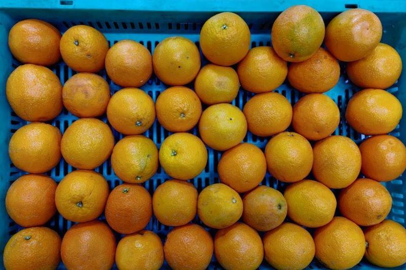 Don't Forget Citrus Fruits
