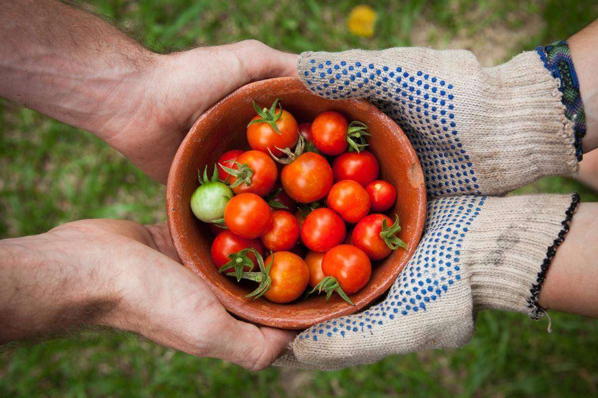 Tomatoes, Raw Or Cooked, Can Improve Blood Sugar