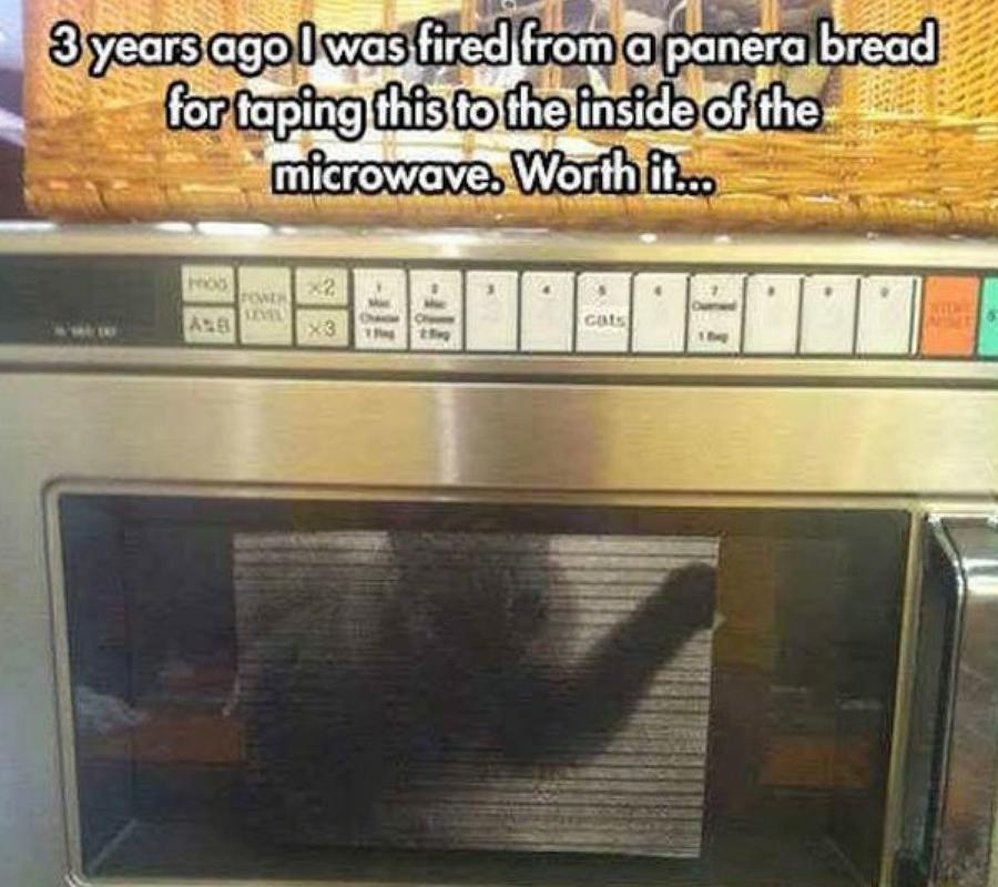 Cat Microwave.jpg