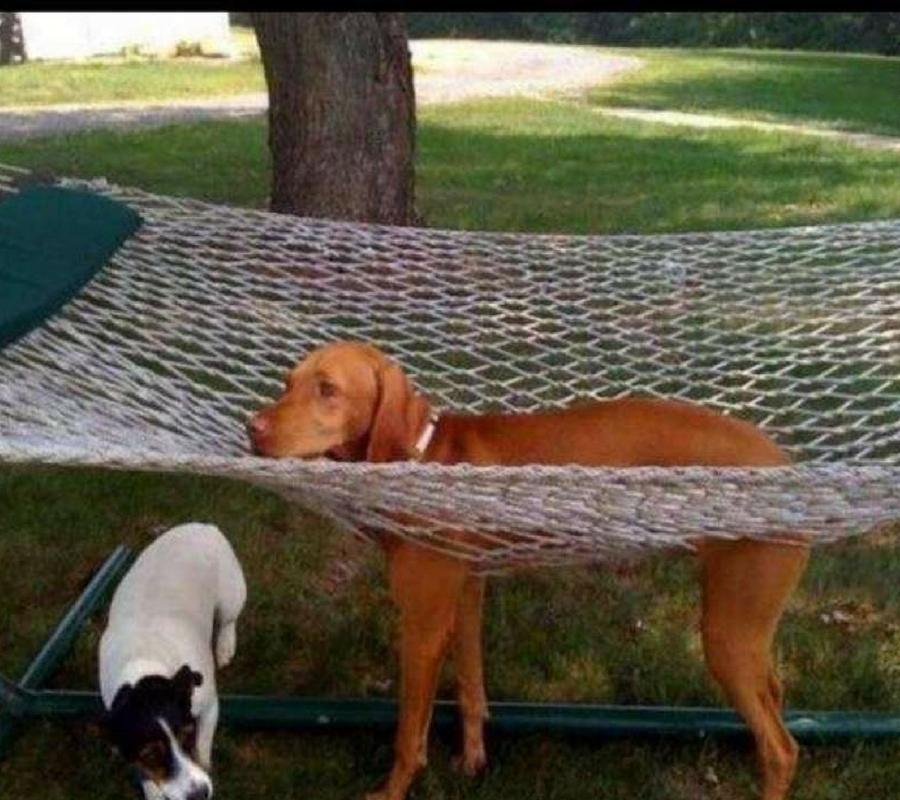 dog in hammock.jpg